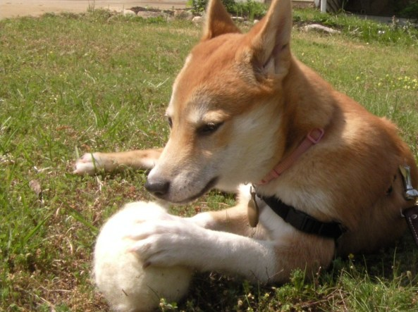 using a wet felted ball as a dog toy